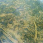 Leaburg Dam - shallows near parking lot
