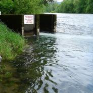 McKenzie River immediately downstream of hatchery outflow.