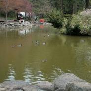 Upper Duck pond, Lithia Park, Ashland
