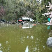 Upper Duck pond in Lithia Park, Ashland, during cleanout in 2008.