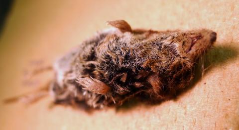 Shrew found in Corvallis, Oregon.