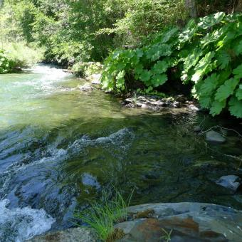 klamath river hindu dating site Klamath river rv park, klamath ca, fishing in klamath, tent camping, redwood national park, rv camping.